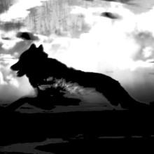 Notre côté loup à Orbe