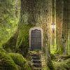 Dans la forêt des contes