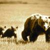 Contes d'ours à Hauterive au Laténium en mai