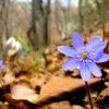 Bientôt à Bienne… forêt, contes, pédagogie