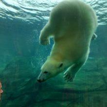 A Nyon en février: le réveil des ours·e·s