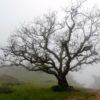 Un arbre vous écoute